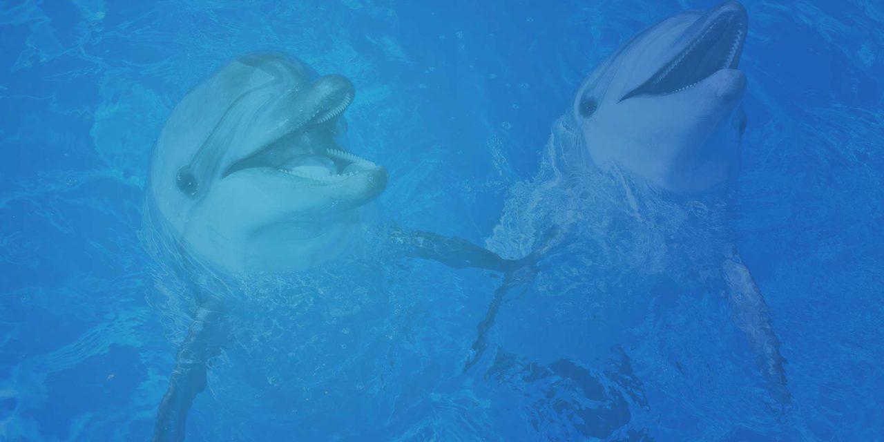 В Севастополе будет два дельфинария!