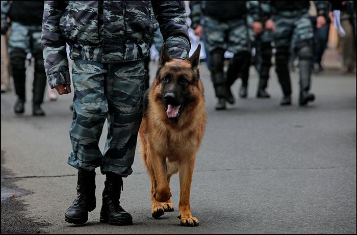 Учеников севастопольской школы эвакуировали из-за сообщения о «бомбе»