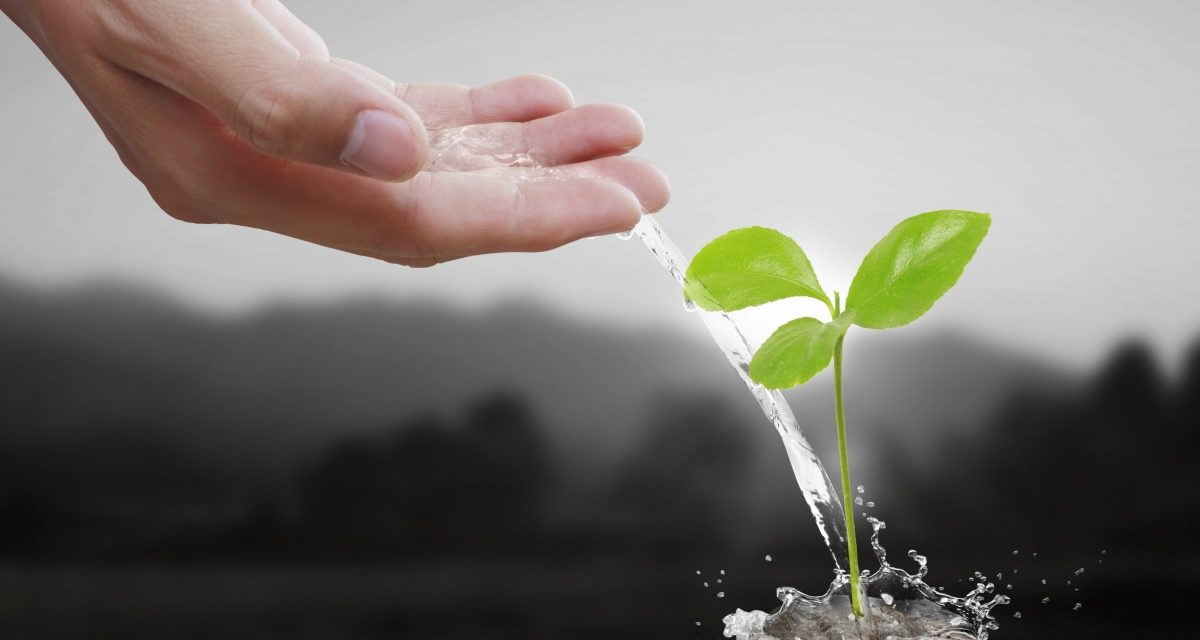 Ученые СевГУ придумали, как сделать удобрения экологичнее и дешевле