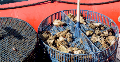 Предприятие рыбопромышленного кластера получило поддержку в размере 1,5 млн рублей