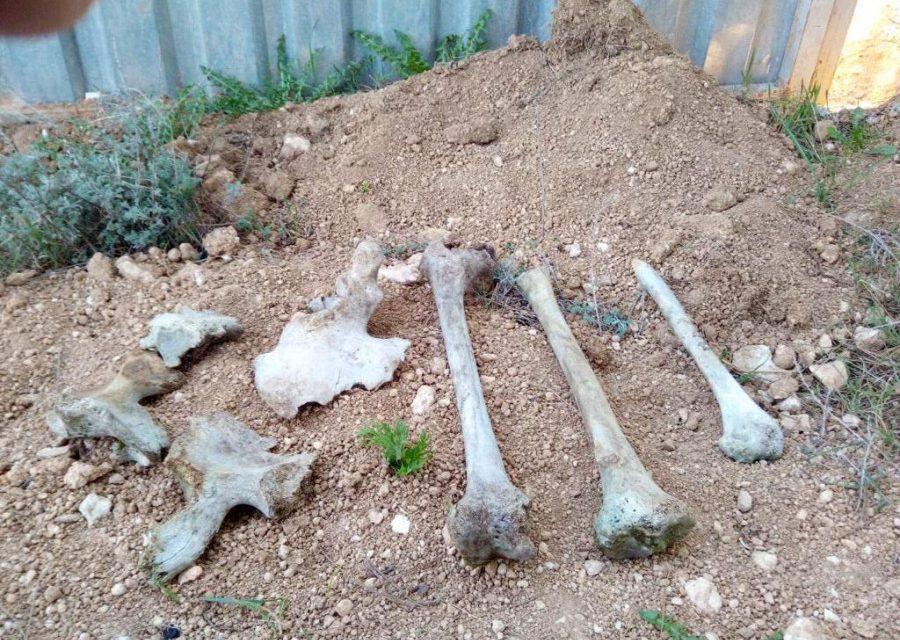 При застройке Казачьей бухты найдены останки защитников Севастополя