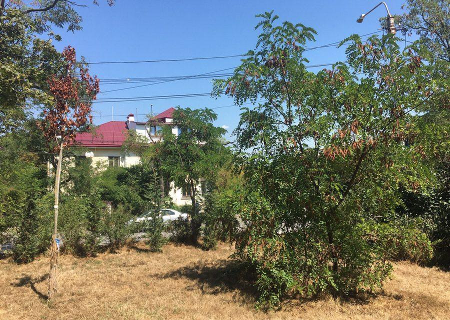 «Руки не из того места растут». Засыхающие парки и скверы Севастополя возмутили губернатора
