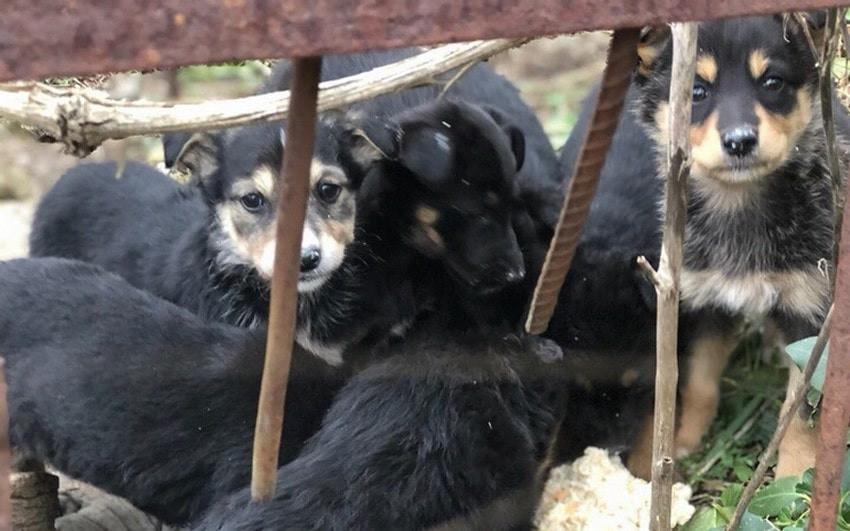 Севастопольского изувера настигло наказание за избиение людей и животных