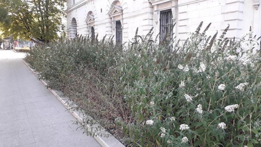 СевСети #1299. Розги вместо цветов и севастопольский собачий магазин