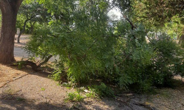 Упавшая ветка софоры перекрыла дорожку в севастопольском парке