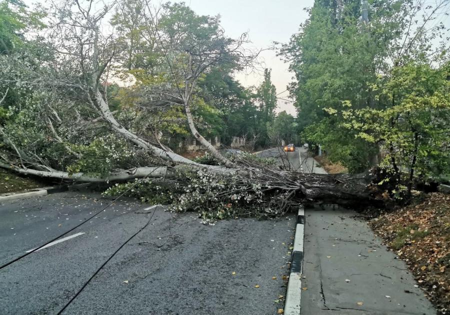В Севастополе проводят ревизию деревьев