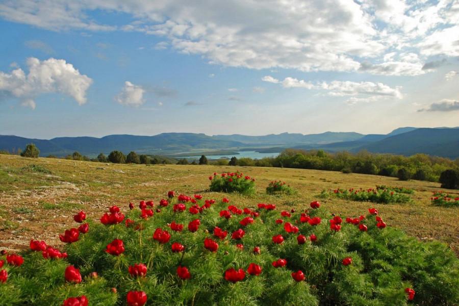 Коттеджного поселка в Байдарской долине Севастополя не будет