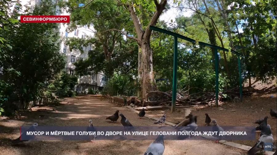 Мёртвые голуби и мусор более полугода ожидают дворника в севастопольском дворе