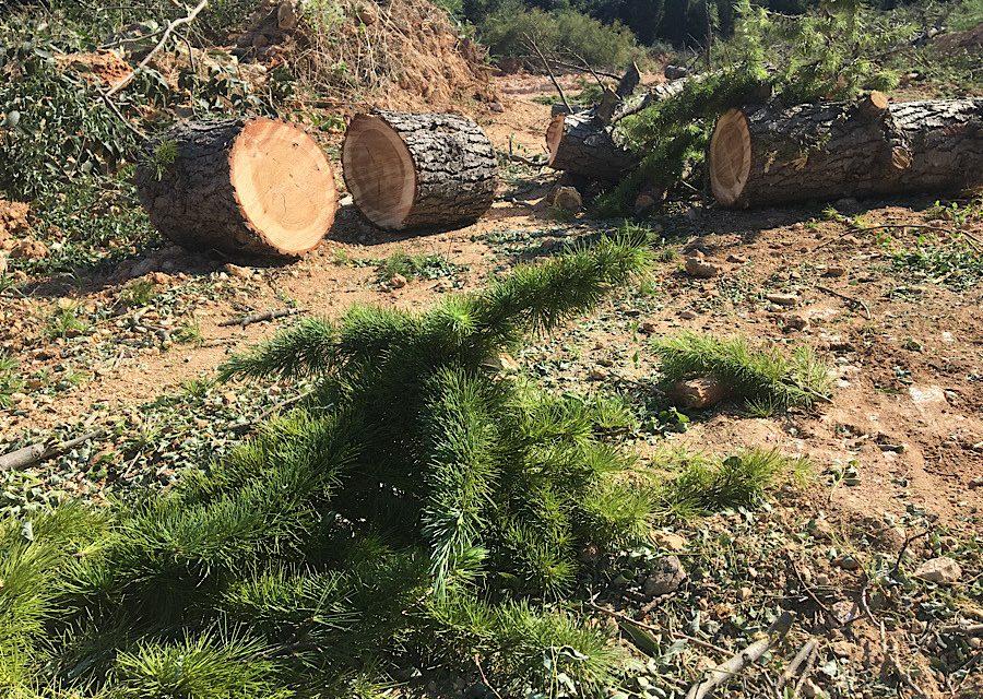 Теперь школа водолазов: над севастопольскими деревьями нависла угроза