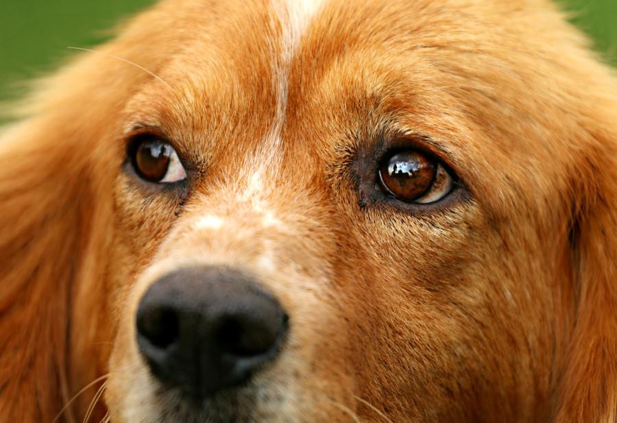 В Севастополе спасли собаку из технического колодца