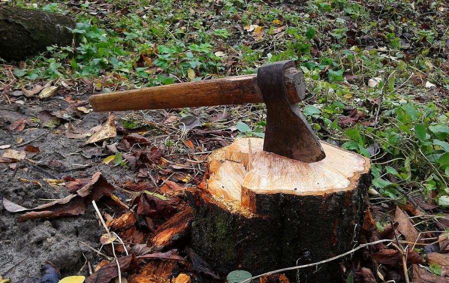 В Севастополе запустили карту вырубаемых и высаживаемых деревьев