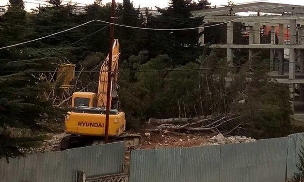 Застройщик требует вырубить в Казачьей бухте ещё больше деревьев